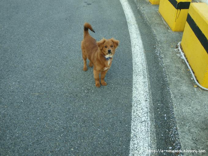 갈색 털 복슬복슬 강아지