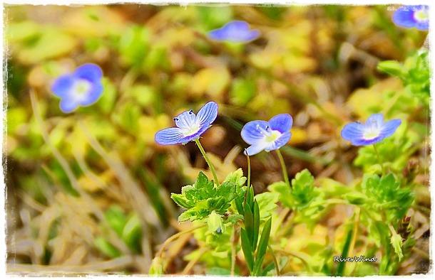 파란 풀꽃