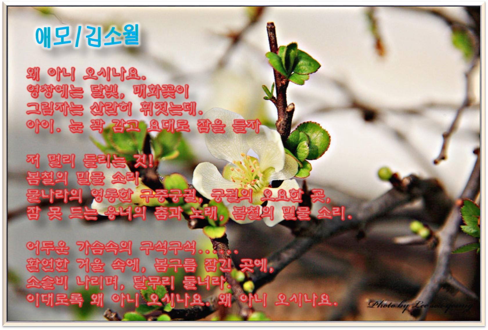 이 글은 파워포인트에서 만든 이미지입니다  애모 / 김소월