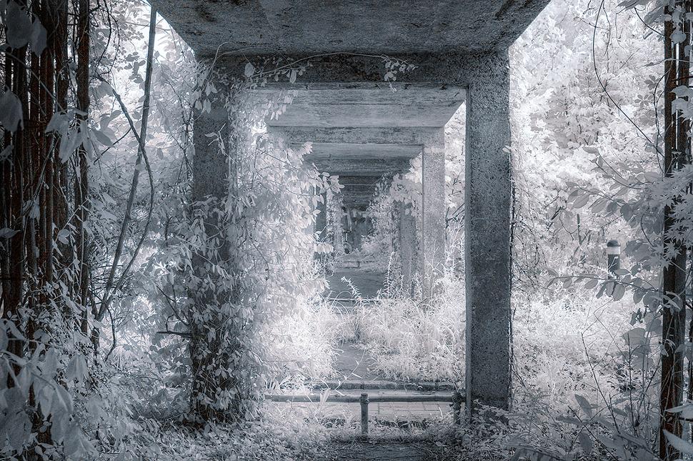 dp2 적외선사진