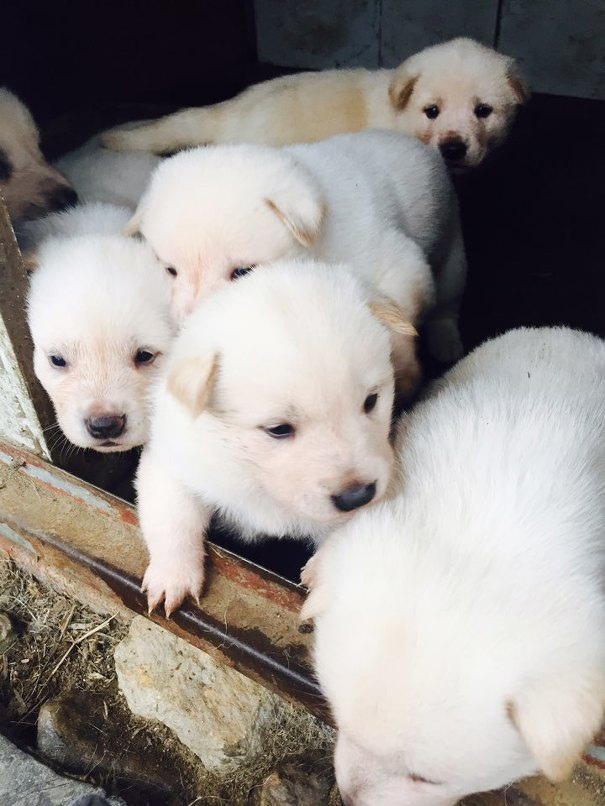 강아지 6마리