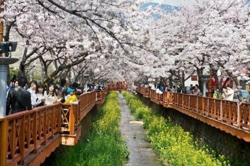 삼성물산 건설부문 봄꽃축제2