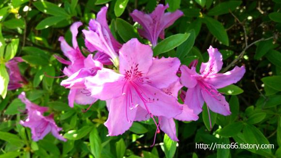 분홍색 꽃