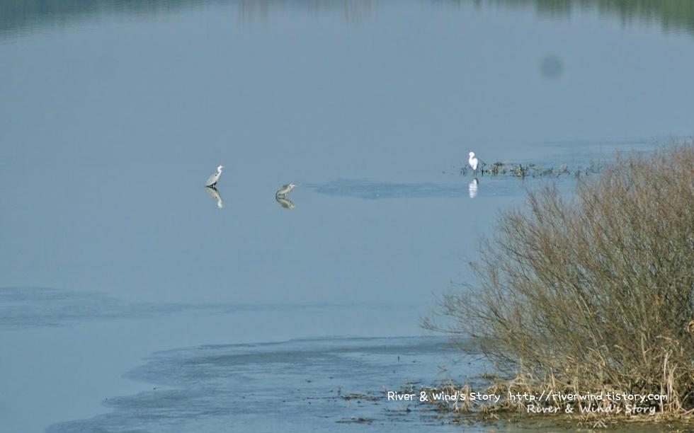 왜가리의 고요한 호수