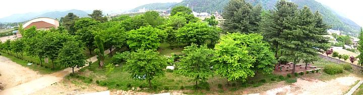 홍천정보과학고 학교숲 전경