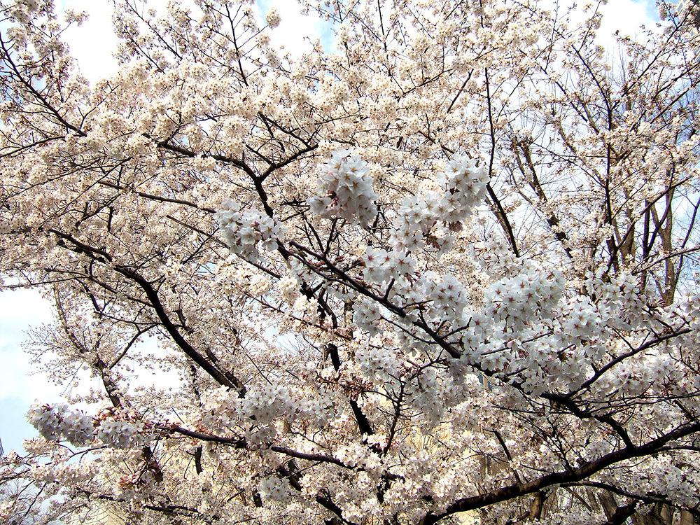 일본여행 - 다음 이야기 : 244C7250513CB882259C34