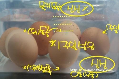 주부 9단이 알려주는 달걀 신선도 체크법
