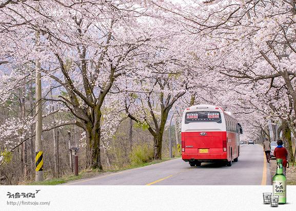 벚꽃 개화 시기