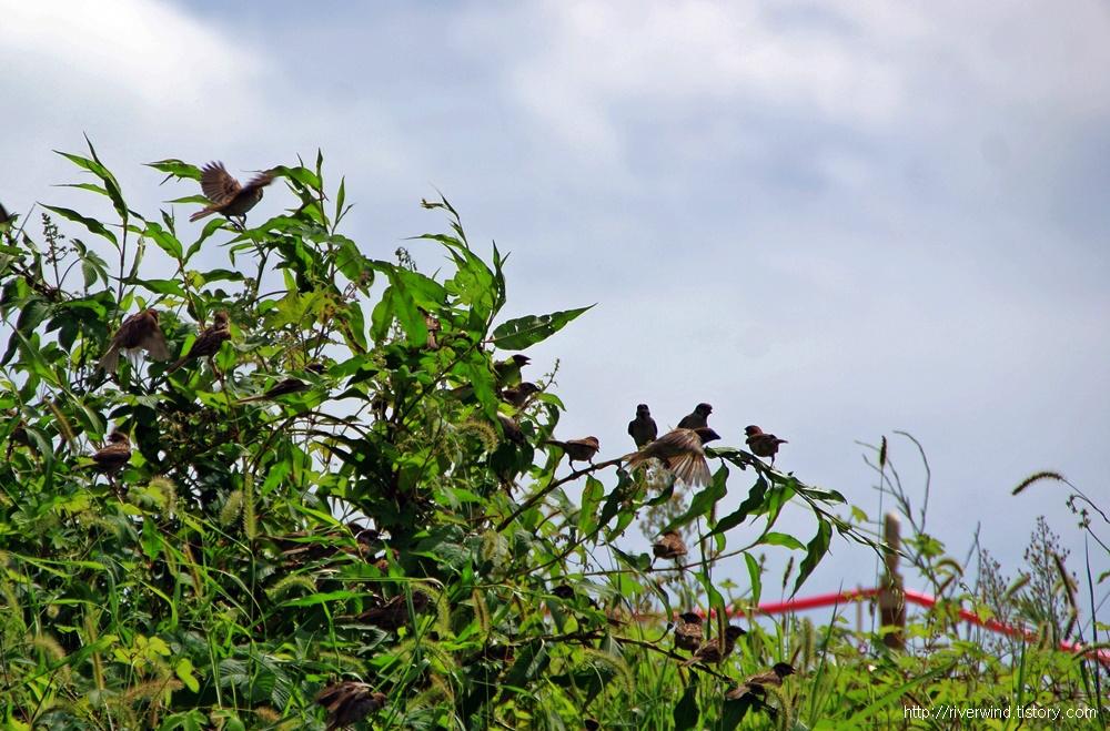 참새들의 쉼터