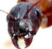 개미 해몽