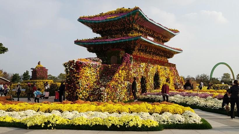 함평국화축제