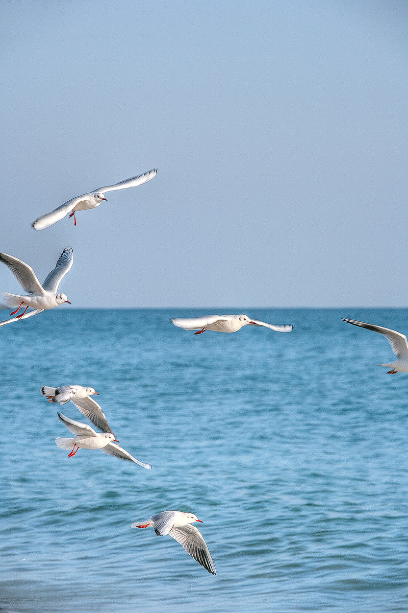 해운대해수욕장에서 갈매기 촬영한 사진-3