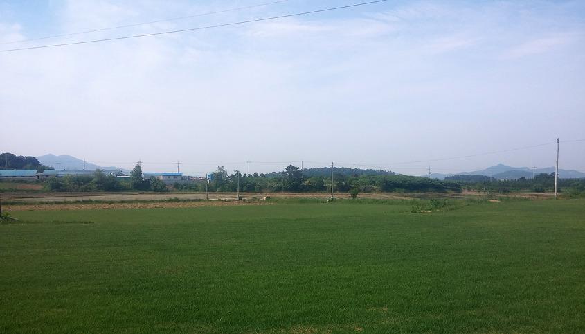푸른 잔디밭