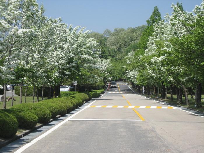한국표준과학연구원 주차장 가는 길