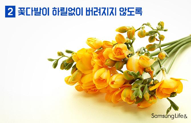 프리지아 프레지아 꽃 선물