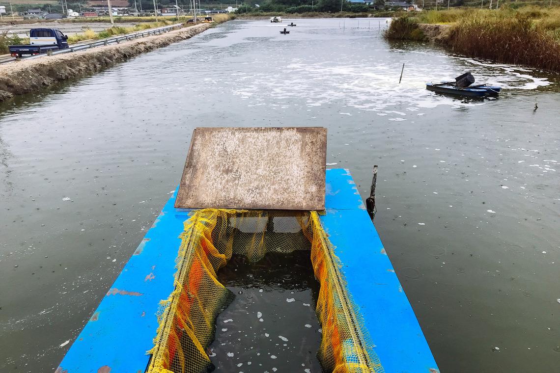 송촌대하양식장