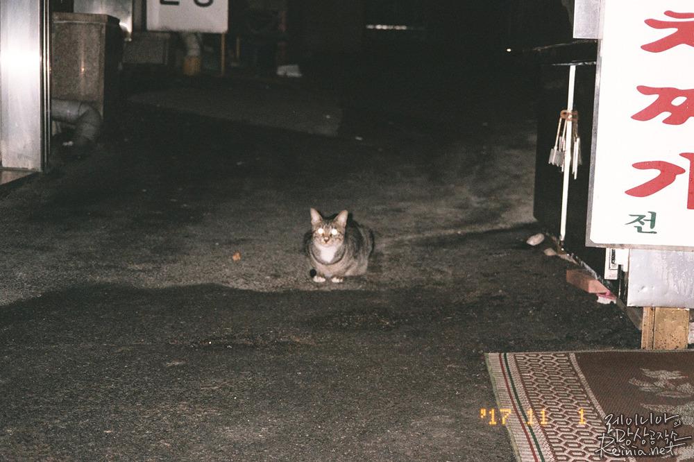 야간 고양이 촬영