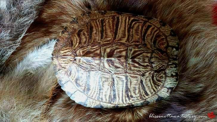 거북이 등껍질입니다