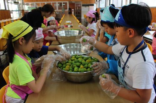 대방초, 전통 식문화체험활동 매실청 담그기