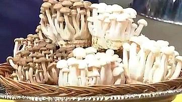 만가닥 버섯