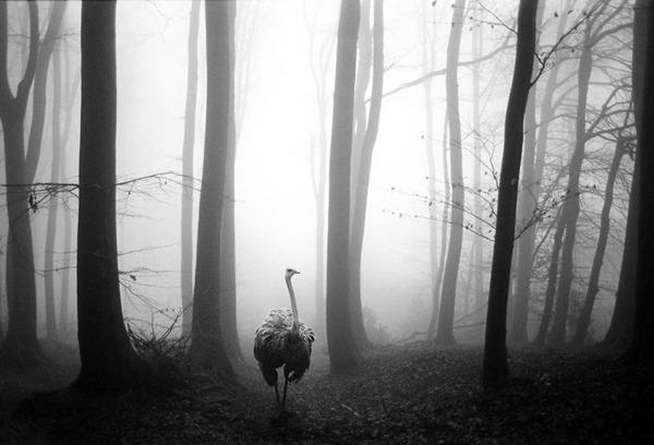 포토샵으로 자유가 된 동물들9