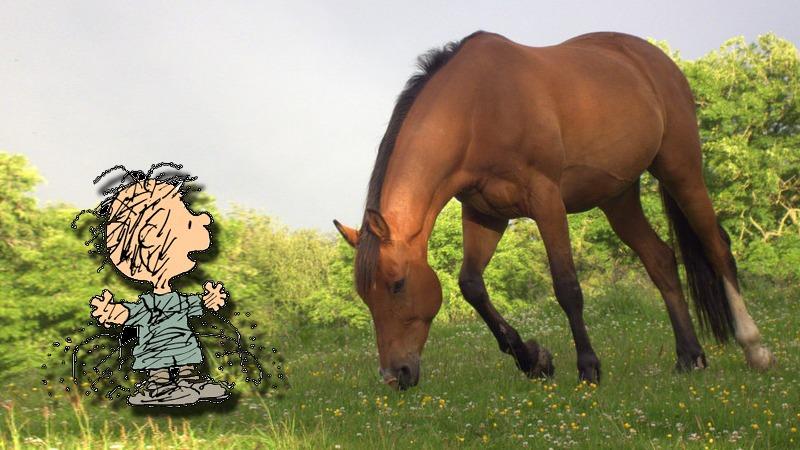 사진: 쥐났다는 영어 표현인 Charley horse는 찰리의 말이 절뚝거리는 상황을 비유한 말이다.