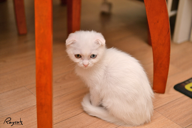 일월 고양이 설사 원충 감염 트리코모나스