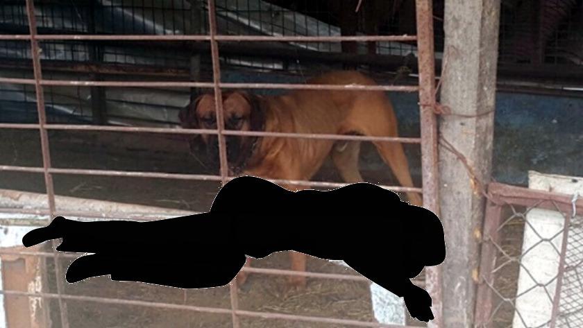 개 사육장서 70대 女주인 도사견에 물려 사망