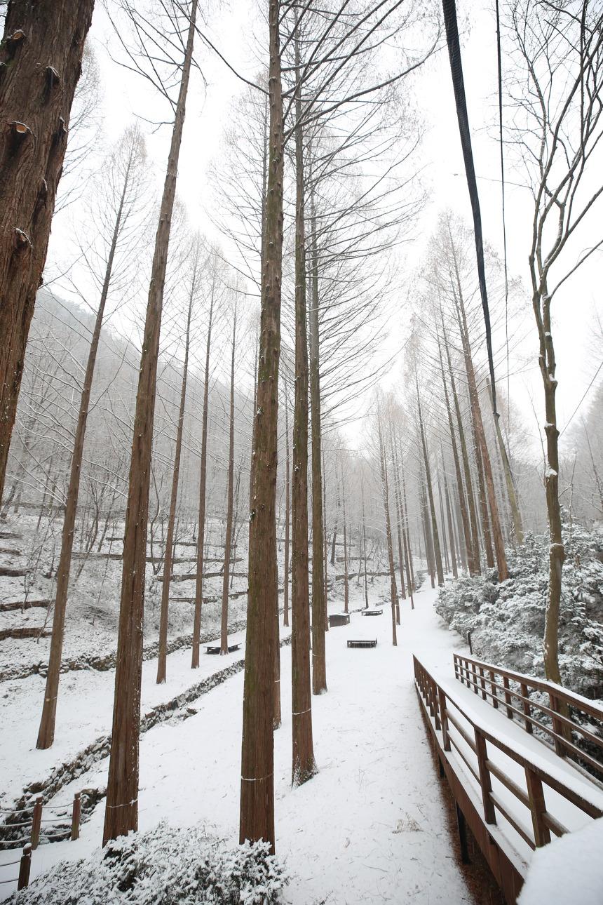 장태산자연휴양림