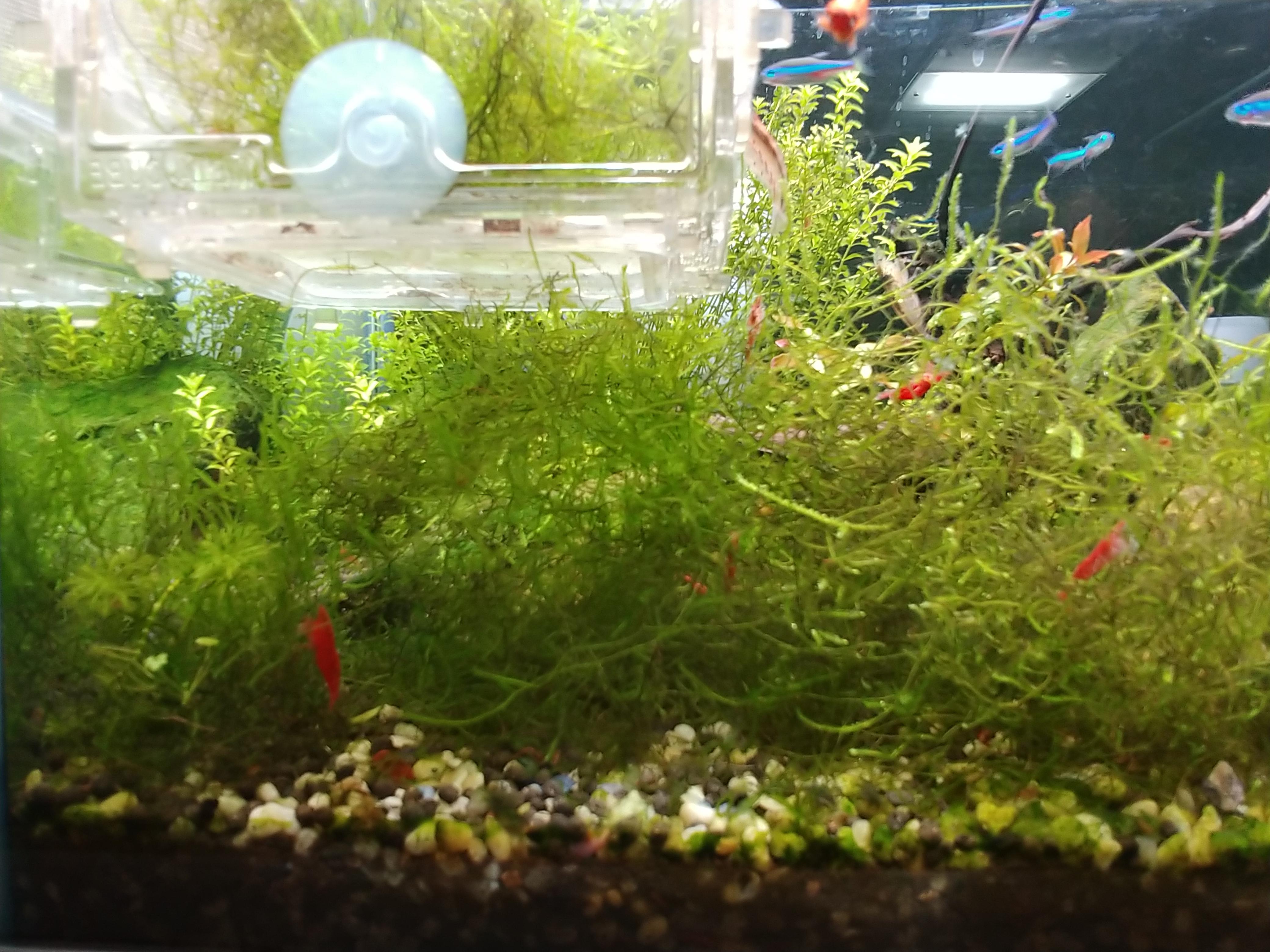 물생활 :: 달팽이