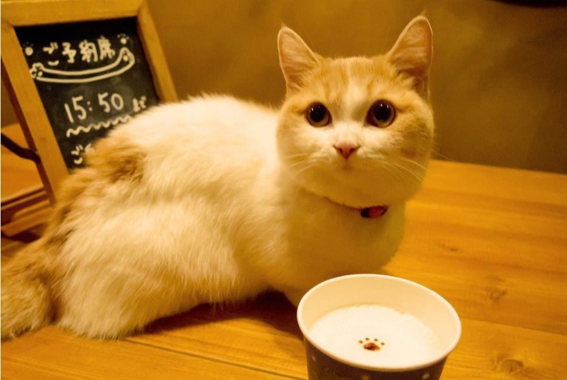 """[일본자유여행] 고양이의 세계에 잠깐 실례! 도쿄 기치조지 """"CatCafe 테마리의 집""""!"""